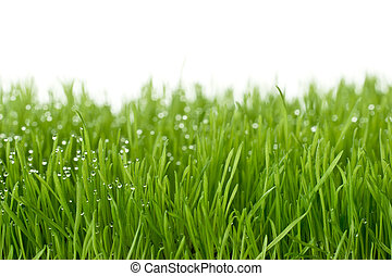 fresh green gras with focal point on the waterdrops