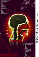 Pharynx - Digital illustration of Pharynx in colour...