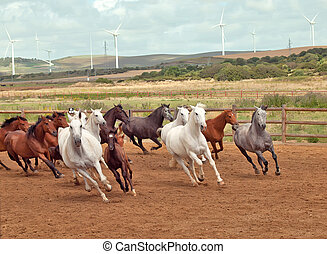 Running spanish horses herd Andalusia Spain