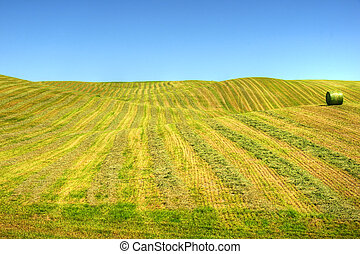 Gentle hills of swathed field