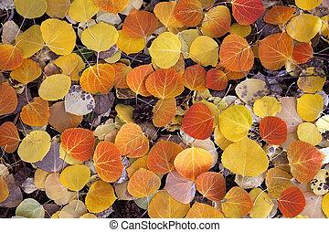 Red Aspen Leaves
