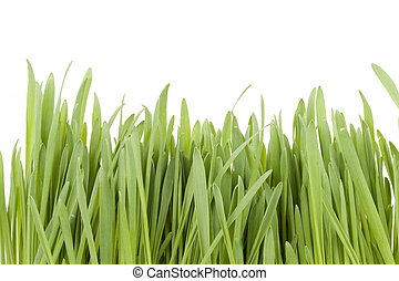 Green grass isolated on a white background