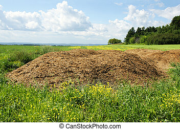 Chicken manure heap - Agriculture concept: Chicken dung hill...
