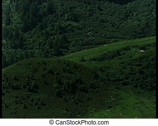 MOUNTAINS pasture and woods vpan