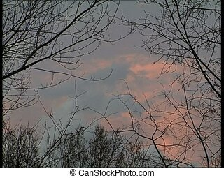 SUNSET pink sky with branches