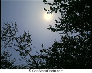 SUN and branches with blue sky - Swaying leaves and branches...