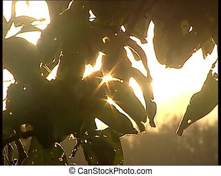 SUN through swaying leaves detail