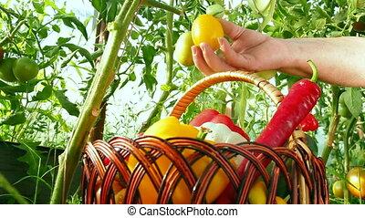 Home Gardener
