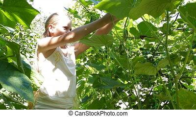 Vegetable in the Garden - Little Girl Harvesting Fresh...