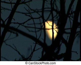 MOON through branches rack focus - Close up of a moon...
