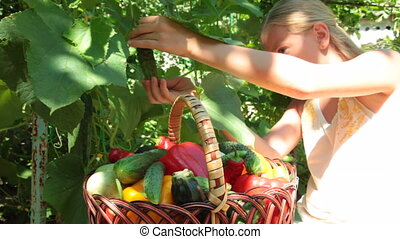 Child Harvesting Fresh Vegetable