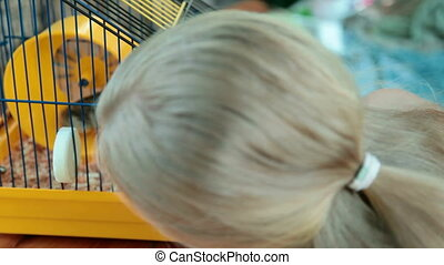 Child Watching a Hamster in a Cage - Little Girl Watching a...