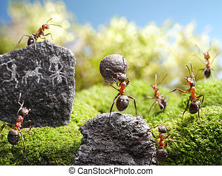 rock carvings, ant tales - rock carvings, deadly weapon, ant...