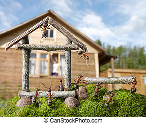 team of ants constructing house, teamwork - woman greetings...