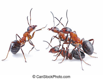 team of ants, meeting - team of ants, conference