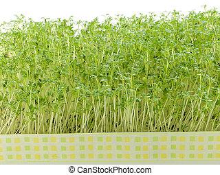 watercress - Close-up of fresh green delicate cress petals