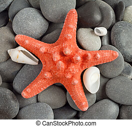 Orange sea star on the dark rocks