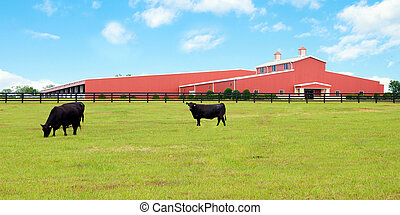 Modern cattle farm in Florida