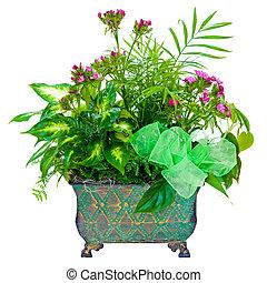 floral, planta, arreglo