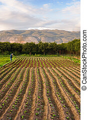 Farm and lone farmer - Image shows an old farmer working on...