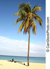 Palm on Cuban beach - Lonely girl sitting on sand near the...
