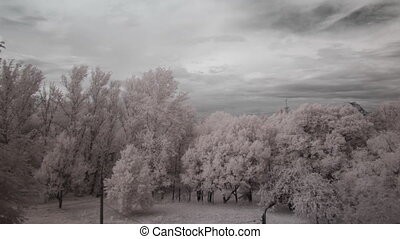 pearl clouds and pale-pink trees - clouds, infrared filter...