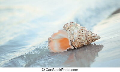 Seashell - Beautiful seashell placed at near summer sea with...