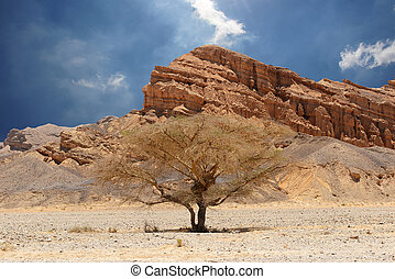 Desert tree and mountains. Desert of Faran.