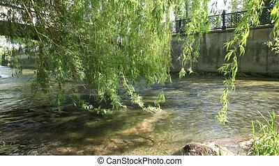 Branches of a willow