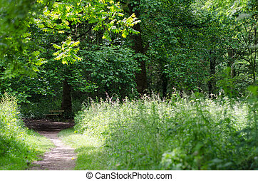 Narrow Path Leading to Empty Park Bench in Wooded Park -...