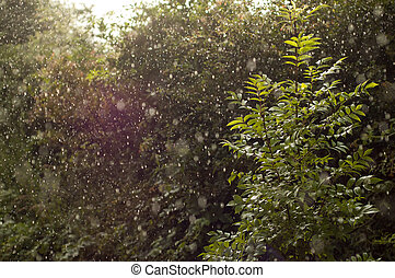 Sun Shining Through Heavy Rain - The sun shines through a...