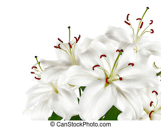 Bunch of large white lilies isolated
