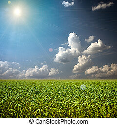Beautiful colorful green wheat field with clouds on the sky