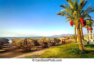 fin, strand, egypten