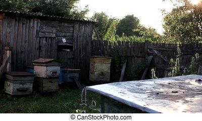 In the evening apiary - In a darkened space, clearly visible...