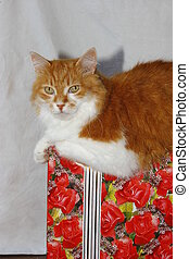 Cat laing on the gift box
