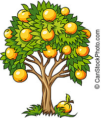 fruit tree isolated - fruit tree vector illustration...