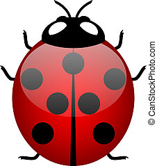 ladybird - Illustration of ladybird symbol of good luck -...