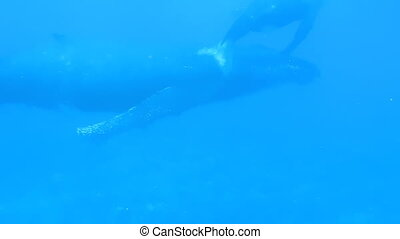 Whale and Calf in French Polynesian Waters