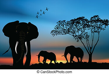 African elephants in the savanna at dawn