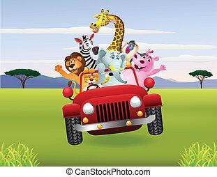 afrikai, állatok, piros, autó