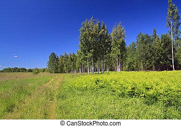 birch copse on green field near rural road