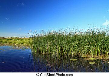 pantano, hierba