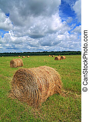 stack hay on summer field