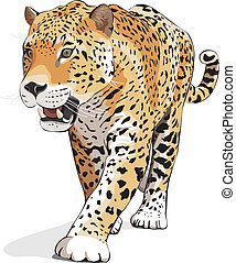 Jaguar - vector, isolated on white, - Jaguar, wild cat...