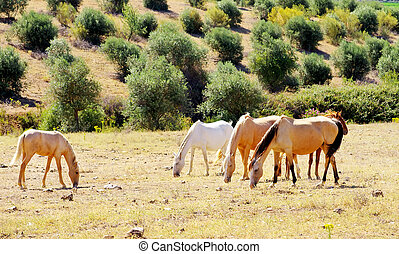 Horses grazing in dry field