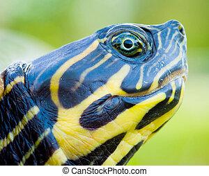 Close up portrait of turtle
