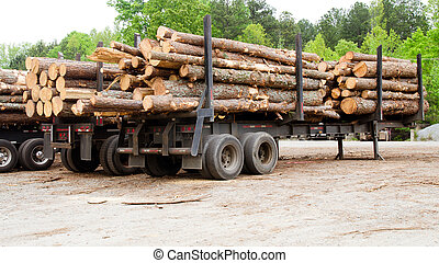 Pine timber stacked on trailers