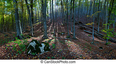 Forest with sun rays - Landscape in beautiful forest with...