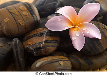 Frangipani flower and polished stone on tropical bamboo mat